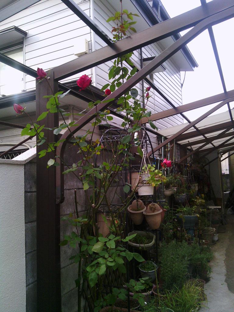 2013-12-26-garage-rose-winter-2013