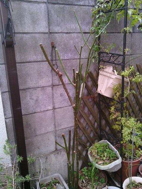 2013-02-04_garage-rose