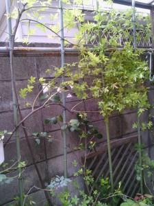 2013-04-25_garage-mokkoubara