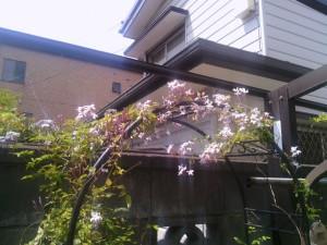 2013-05-09_garage-jasmine