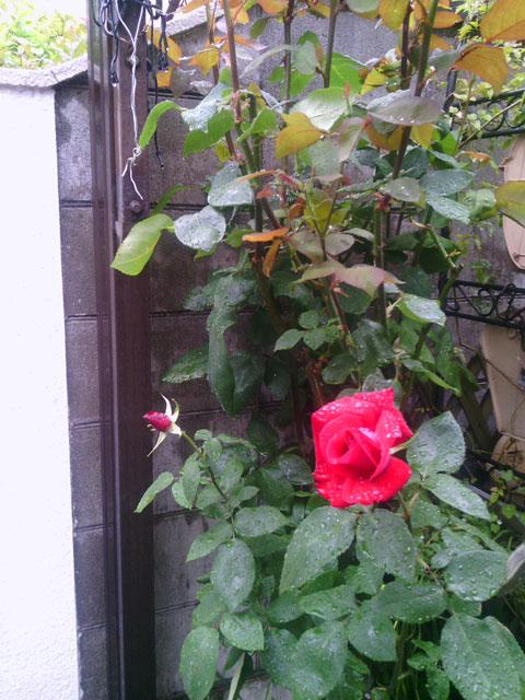 2013-05-11_garage-rose