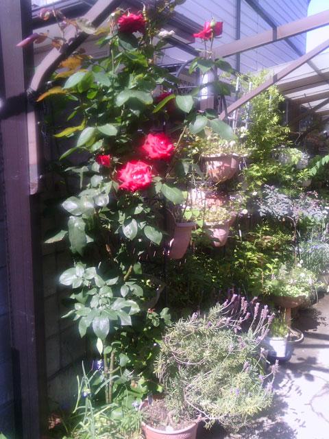 2013-05-31_garage-rose