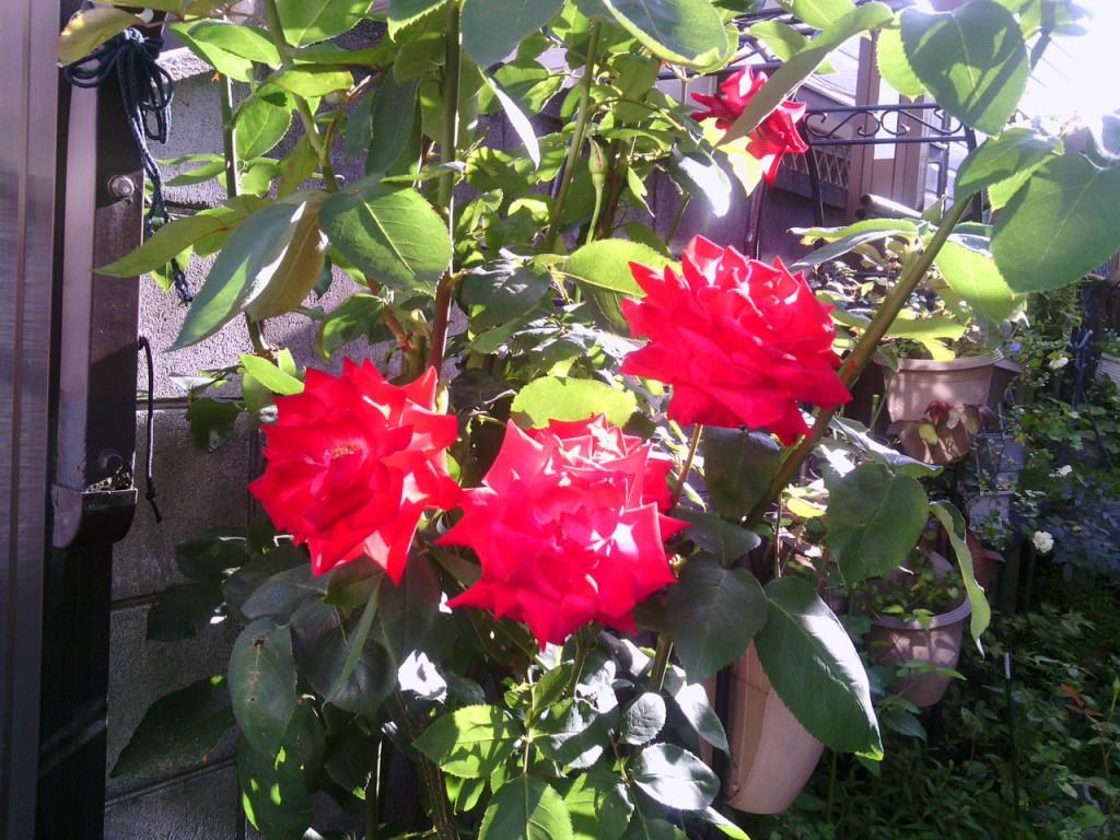 2013-06-02_garage-rose-zoomup