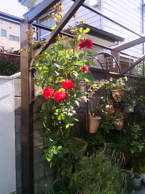 2013-06-02_garage-rose