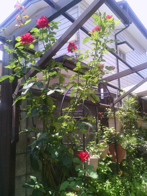 2013-06-29_garage-rose