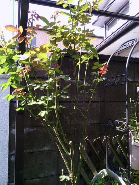 2013-07-28_garage-rose