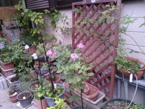 2013-08-03_garage-unknown-rose02