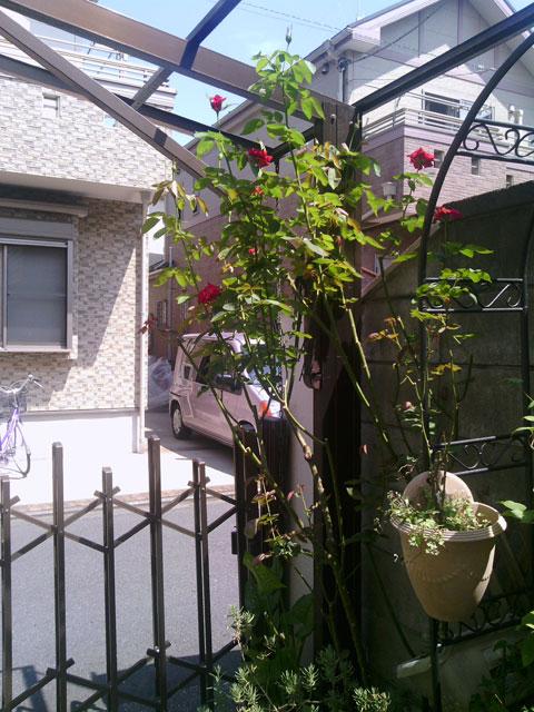 2013-08-05_garage-rose