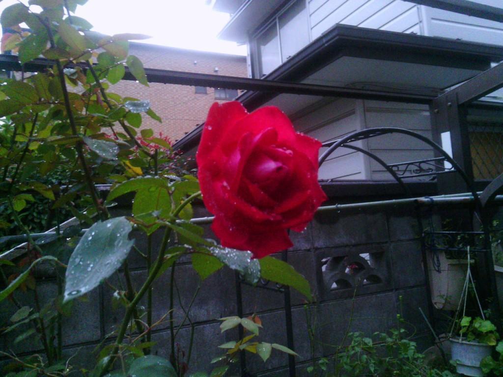 2013-10-29_garage-rose