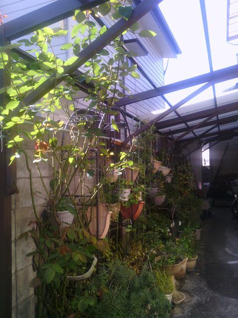 2013-11-19_garage-rose