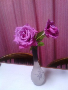 2013-11-25_unknown-rose