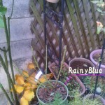 2013-12-12-seeding-rainyblue
