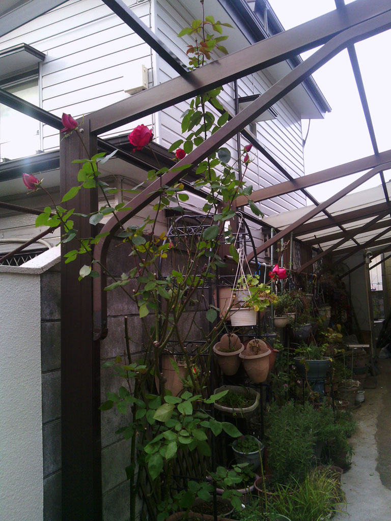 2013-12-26-garage-rose-winter-2013